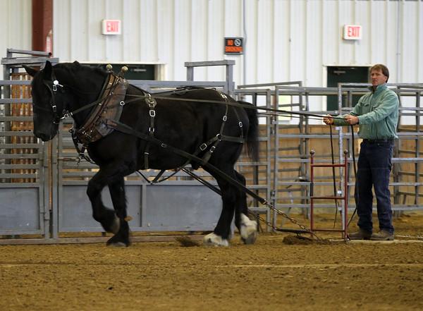 Draft Horses 2015