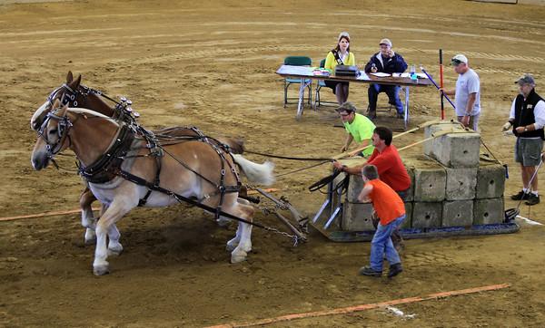 Horse Pulling 2014